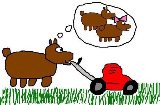 bearmow.jpg